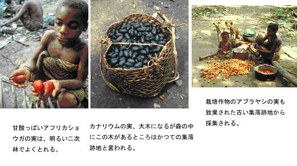 http://jambo.africa.kyoto-u.ac.jp/cgi-bin/CameroonFS/wiki.cgi?action=ATTACH&page=%A5%A2%A5%D5%A5%EA%A5%AB%C7%AE%C2%D3%CE%D3%A4%CE%CE%F2%BB%CB%C0%B8%C2%D6%B3%D8%A4%CB%A4%E0%A4%B1%A4%C6%A1%A1by+%BB%D4%C0%EE%B8%F7%CD%BA&file=5%2Ejpg