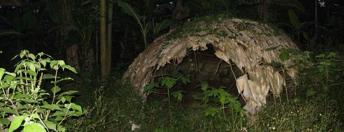 http://jambo.africa.kyoto-u.ac.jp/cgi-bin/CameroonFS/wiki.cgi?action=ATTACH&page=%B9%D4%B7%B3&file=img%5F2134%5F5%2Ejpg